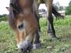 donkey2713744