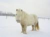 maran-in-de-sneeuw